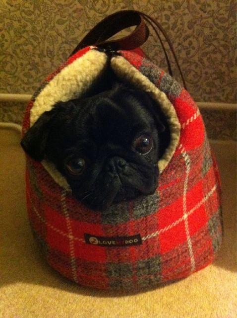 Harris Tweed Love My Dog