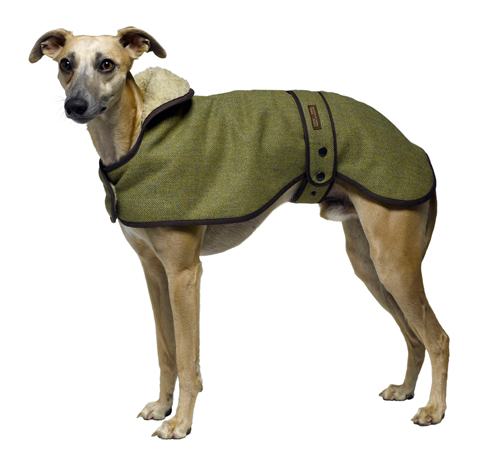 designer greyhound dog coat