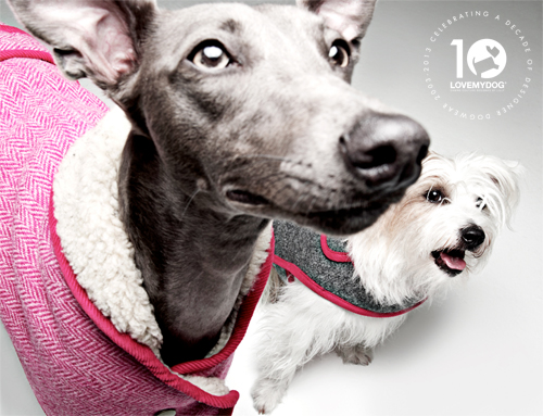 Beans & Rabbit - Canine couture from LoveMyDog shot by Rankin