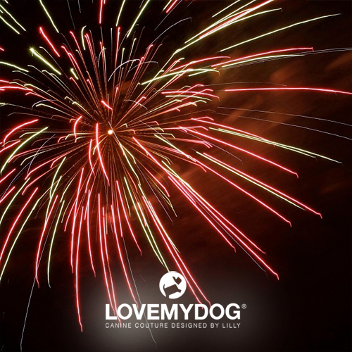 Bonfire Night - What you need to know to keep your dog safe