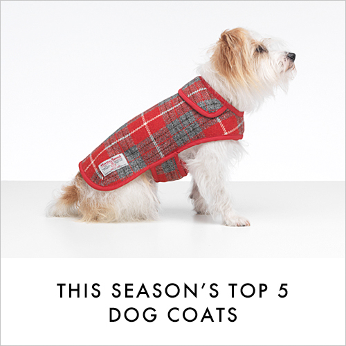 Top Winter Dog Coats