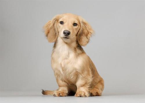 Top 10 dashing dachshunds