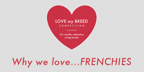 Why we love... Frenchies