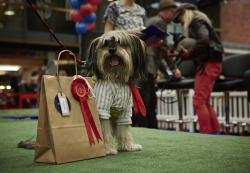 Goose was the 'Best in Show Winner'