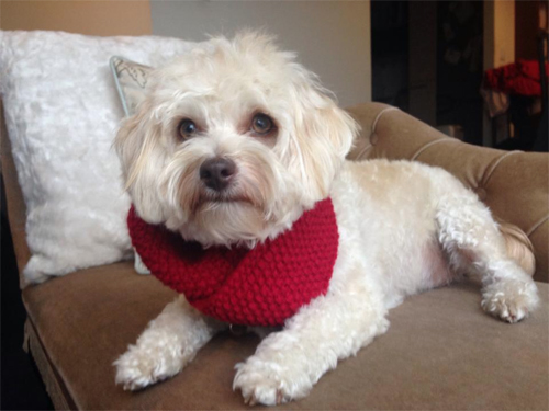 Poppy won a red LoveMyDog snood, an item from our new AW14 Collection