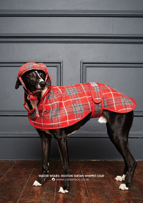 Named after the trendy area of London where we have our design studio, the Hoxton Tartan Collection includes a dog collar, dog lead and dog coat, plus a dog bed, blanket and pet carrier.