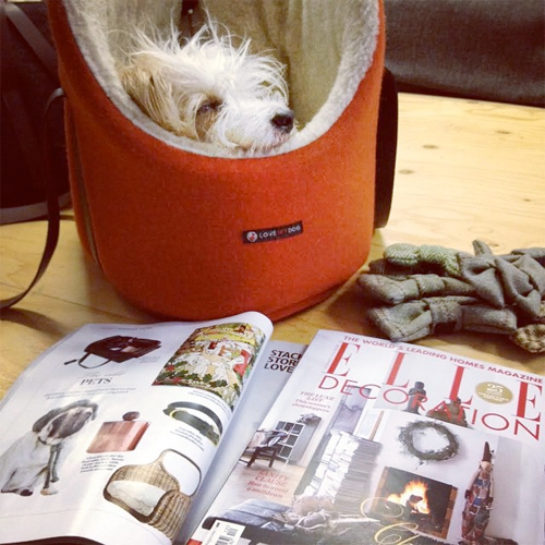 Trying to wake Rabbit up and tell him we are in Elle Deco again!
