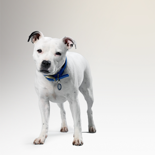Can you help Battersea?