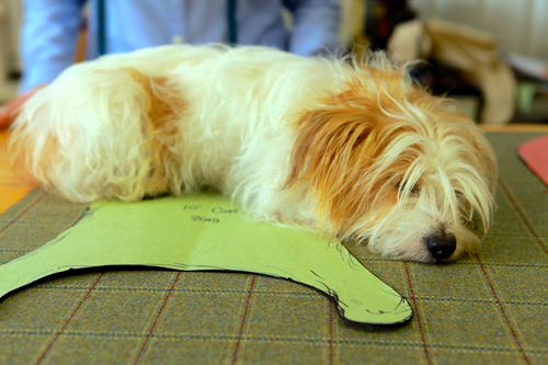 LoveMyDog - Designer Dogwear / Posh Dogs