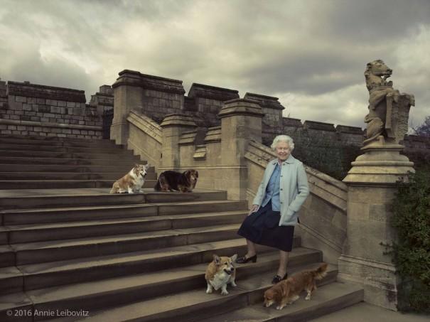 aristo pets queen